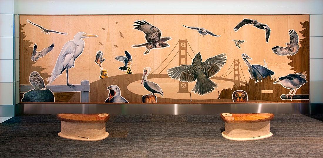 San Francisco Bay Area Bird Encounters