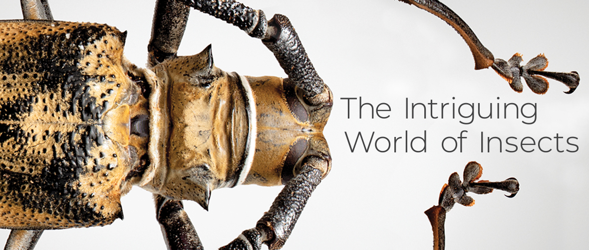 The Intriguing World of Insects