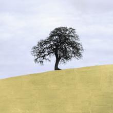 Lone Oak, Central California  2013