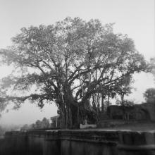 Banyan Tree, from Memories of India  2005