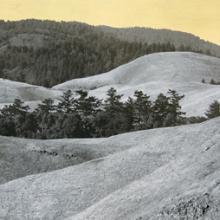 Cluster, Mount Tamalpais, California  2013
