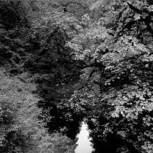 Fall Foliage, Stream, Jedediah Smith Redwoods State Park, California  1987