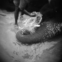 Washing Elephant, from Memories of India  2003