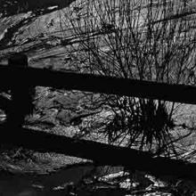 Mud, Bush, and Fence
