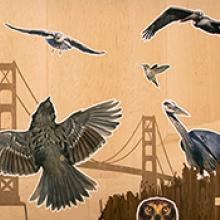 San Francisco Bay Area Bird Encounters